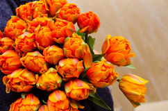 橙色郁金香花束 免版税库存图片