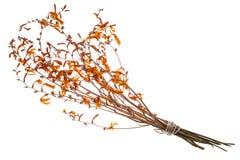 橙色颜色干词根、叶子和花  免版税图库摄影