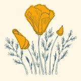 橙色鸦片 免版税库存图片