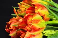 橙色鹦鹉郁金香花束 库存照片