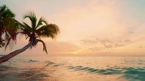 橙色黄昏自然棕榈树靠岸 波浪海黄昏背景 棕榈群岛海景 股票视频