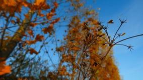 橙色黑镶边甲虫在多瑙河海岸的秋天 免版税库存照片