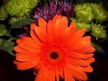 橙色,绿色和紫色花五颜六色的花束  免版税库存照片