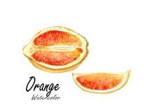 橙色 在白色背景的手拉的水彩绘画 也corel凹道例证向量 免版税库存照片