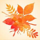 橙色水彩被绘的秋天叶子背景 库存照片