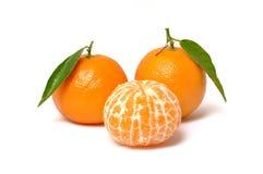 橙色3棵的柑桔 库存图片