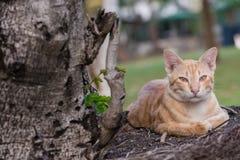 橙色离群猫 库存照片