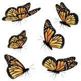 橙色黑脉金斑蝶 皇族释放例证