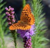 橙色紫色 免版税库存照片