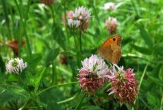 橙色蝴蝶和蜂在花 图库摄影