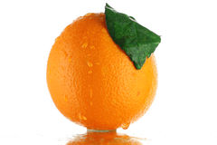橙色 图库摄影