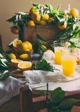 橙色 Haervest概念 橙汁,充分的箱子桔子结果实蚂蚁在桌上的橙树分支与亚麻布 免版税库存照片