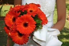 橙色2朵的雏菊 库存图片