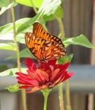 橙色Butterfly1 库存图片