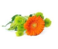 橙色Herbera 免版税库存图片