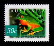 橙色thighed雨蛙Litoria xanthomera,澳大利亚-雨林serie的本质,大约2003年 免版税图库摄影