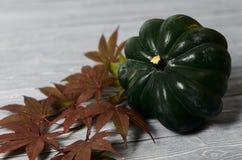 橡子南瓜和红色秋天在灰色木背景生叶 harv 库存图片