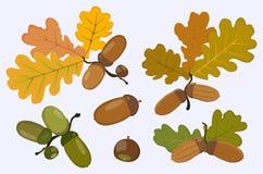 橡子和橡木叶子的图 也corel凹道例证向量 免版税图库摄影
