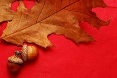 橡子和橡木叶子 库存图片
