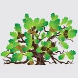橡子大绿色橡树 库存图片
