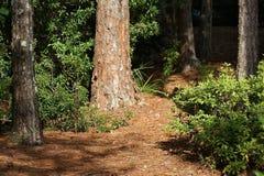 橡子秋天背景边界设计森林橡木阳光 免版税库存图片