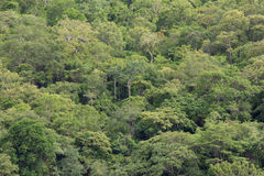 橡子秋天背景边界设计森林橡木阳光 库存照片