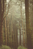 橡子秋天背景边界设计森林橡木阳光 免版税库存照片