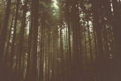 橡子秋天背景边界设计森林橡木阳光 图库摄影