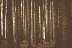橡子秋天背景边界设计森林橡木阳光 免版税图库摄影