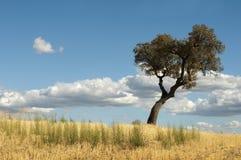 橡子结构树和蓝色多云天空 免版税库存照片