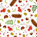 橡子,栗子,槭树种子,与叶子的花楸浆果束,糖在白色背景的杉木锥体的森林无缝的样式 皇族释放例证