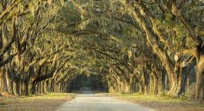 橡木剧烈的大道  库存照片