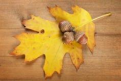 橡木叶子和三橡子 免版税库存照片