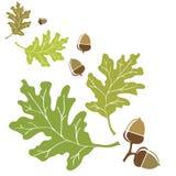 橡木叶子和橡子 免版税库存照片