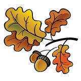 橡木叶子和橡子 免版税库存图片