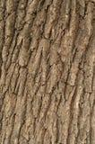 橡木吠声的压印的纹理  图库摄影