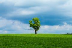 橡木和天空 免版税库存照片