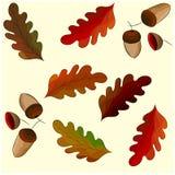 橡木和橡子,无缝的样式叶子  图库摄影
