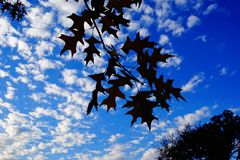 橡木在树离开反对天空蔚蓝 免版税库存图片