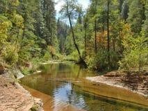 橡木在Sedona的小河峡谷西部叉子的池塘  免版税库存照片