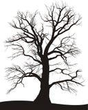 橡木夏天结构树 免版税库存图片