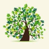 橡木夏天结构树 库存照片