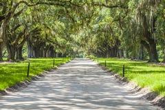 橡木大道在Boone霍尔种植园的 免版税库存照片