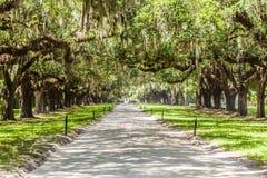 橡木大道在Boone霍尔种植园的 库存图片
