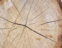 橡木日志 免版税库存图片