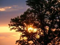 橡木日落剪影 库存图片