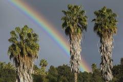 橡木景色,加利福尼亚,美国, 2015年3月1日,在雨风暴的充分的彩虹在Ojai谷,与棕榈树 免版税库存照片