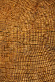 橡木构造结构树 免版税库存照片