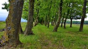 橡木树丛的看法 免版税库存图片