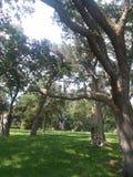 橡木树丛 库存图片